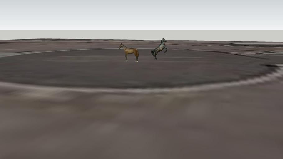 cavallos charo theuacan pue mèxico