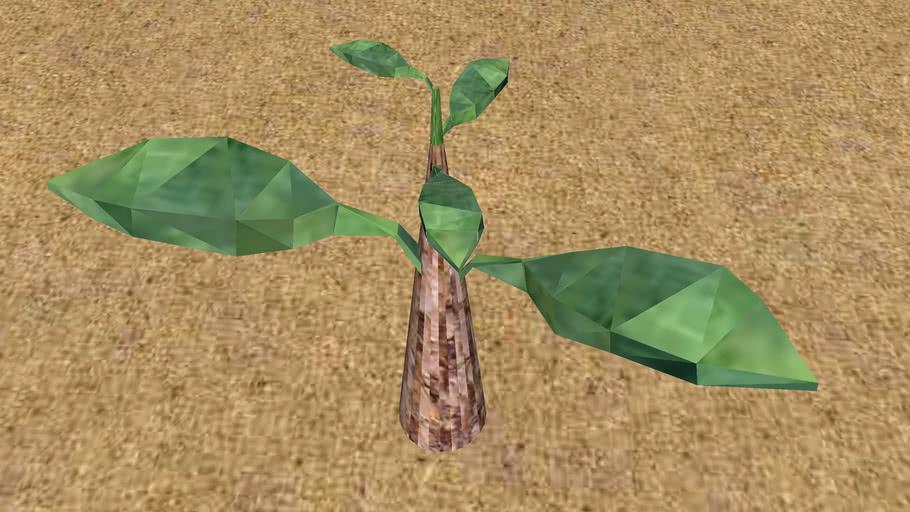 3D Mango Plant Sprout