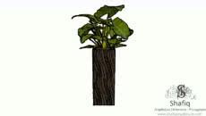 plantas en floreros
