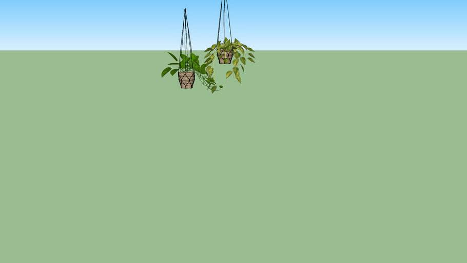 hangplantjes