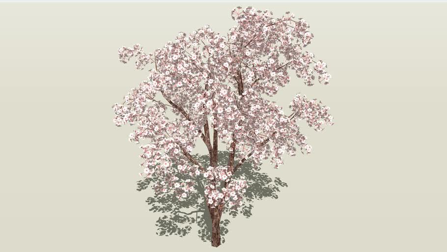 Cherry Blossoms 3d Warehouse