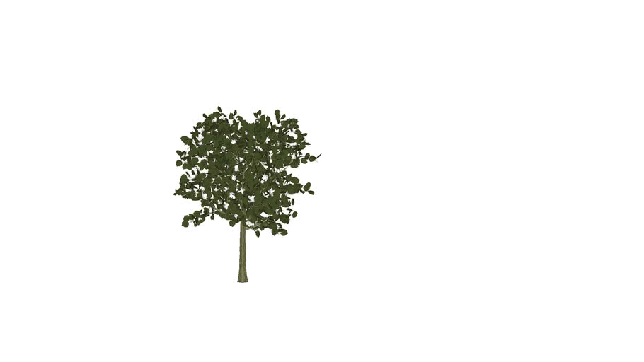 Artificial Southern Magnolia Tree- 3D