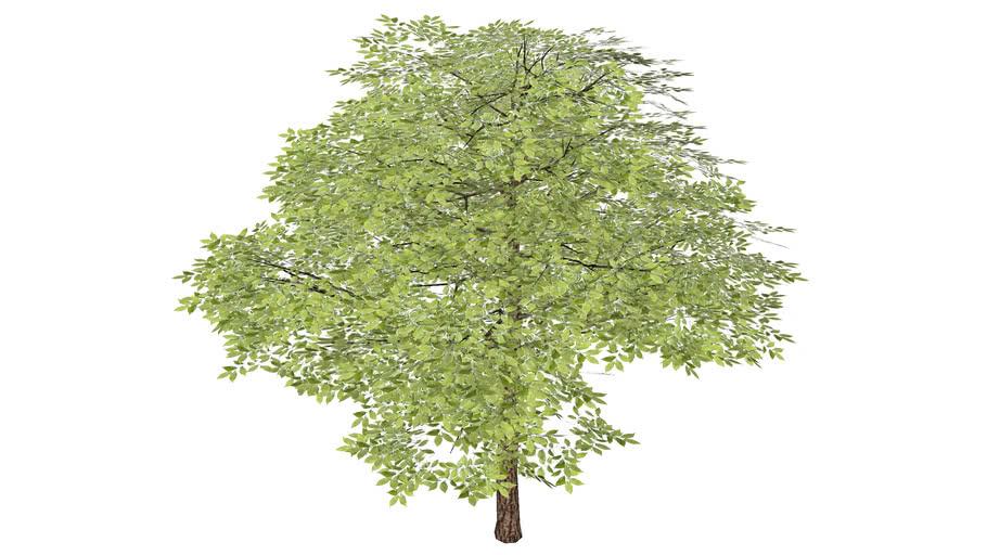 Árvore XVI