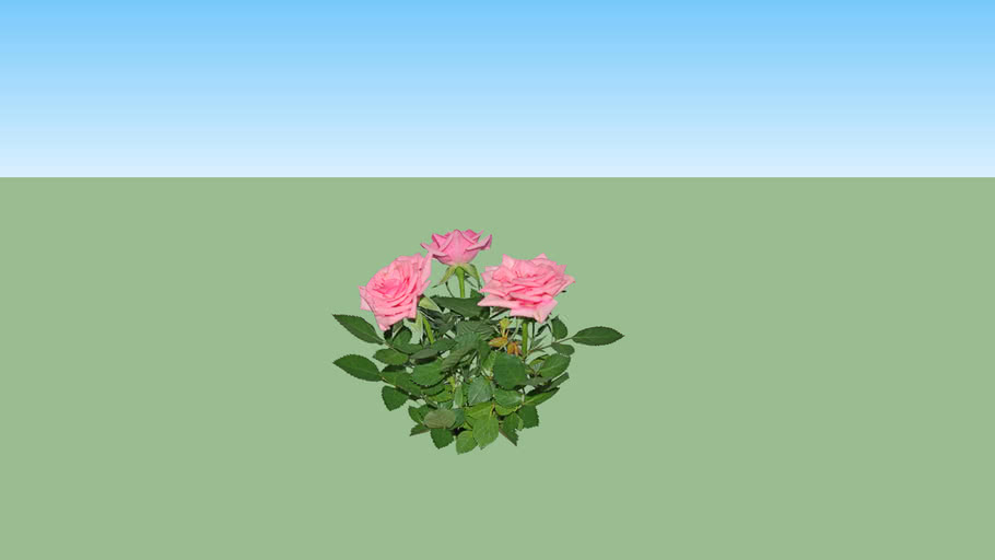 Mawar Pink - Rose Pink