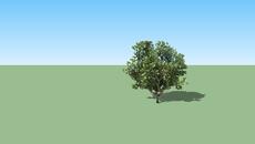 EXTERIOR_TREE