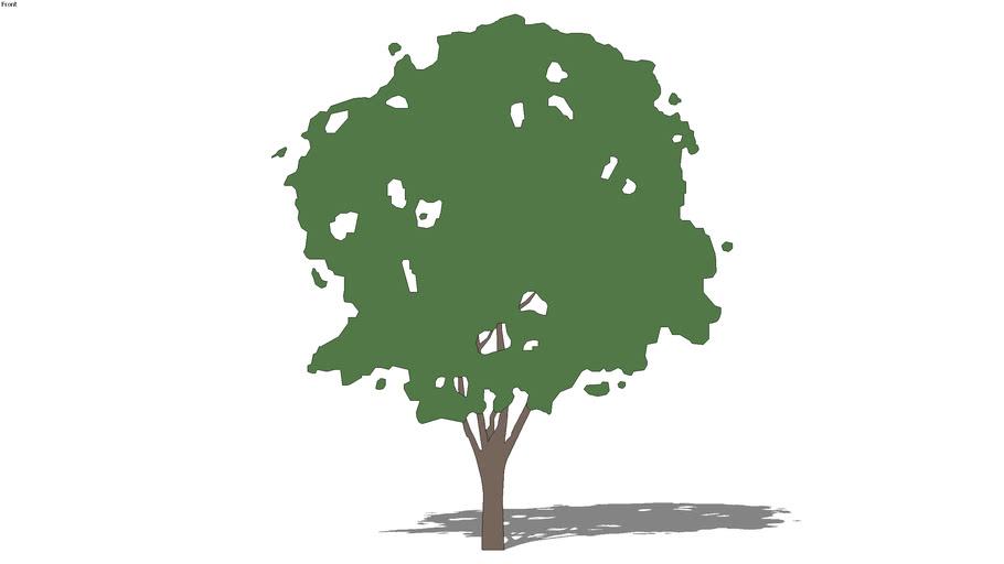 2D schematic cherry tree