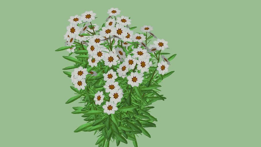 """Coreopsis """"Star Cluser"""""""
