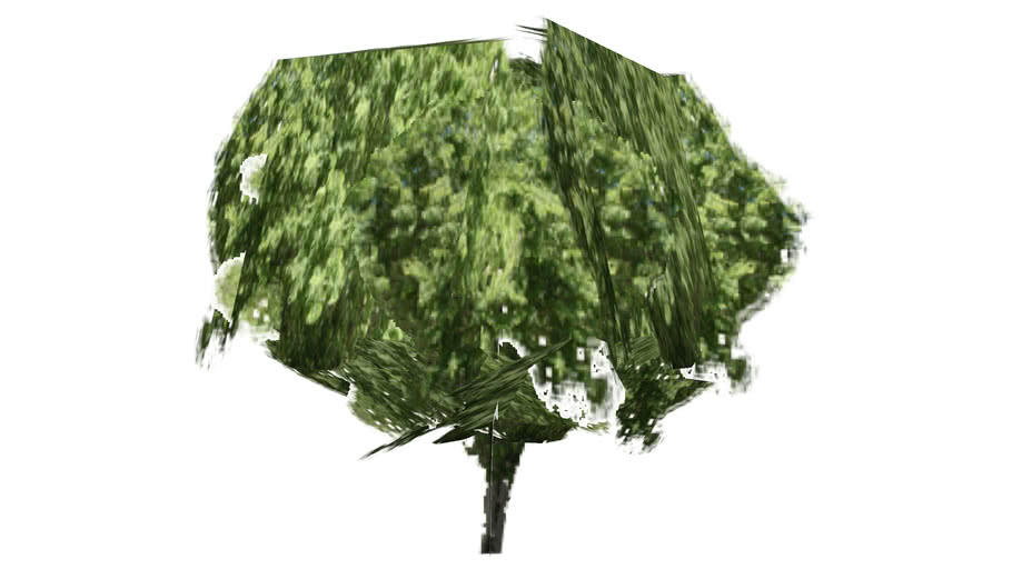 Low Poly Chinese Elm