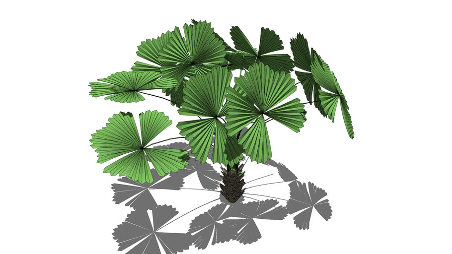 PLANT K