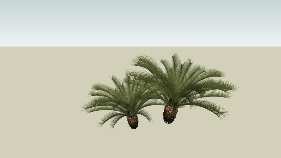 Arbusto XII