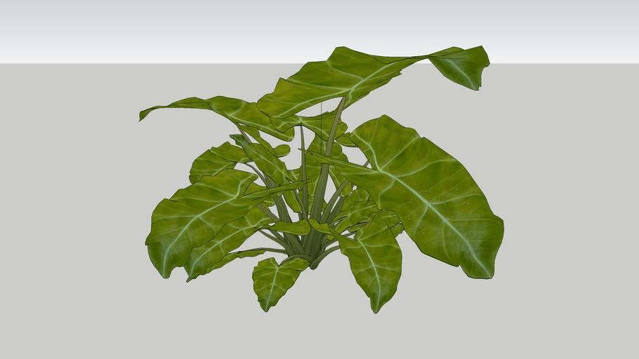 vegetacao externa22