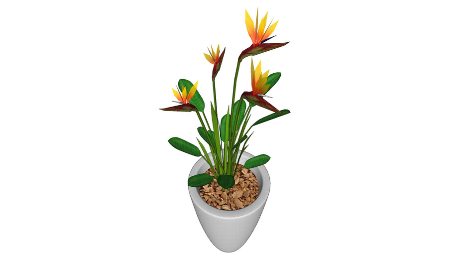Flor Ave do Paraíso / Bird Of Paradise Flower