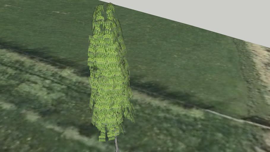 Els deel 180 boomgaard Stille Pieter