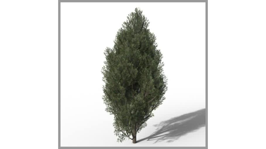 ROCKIT3D | Chamaecyparis 2.0 m (Cypress)