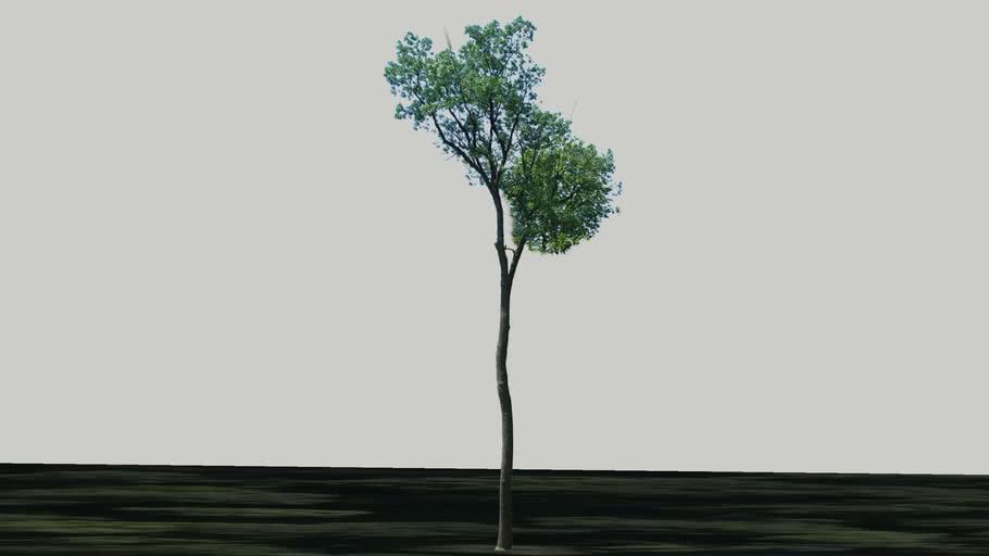 Zamok Veselí nad Moravou - Strom 37