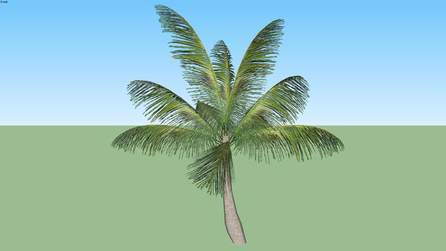 Palmeira 01