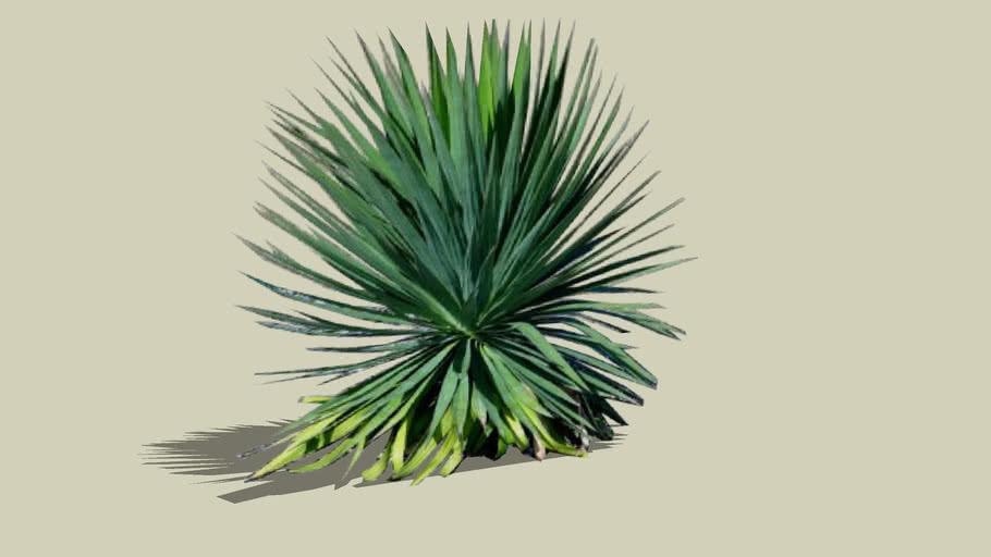 Fiori Yucca.Yucca 3d Warehouse