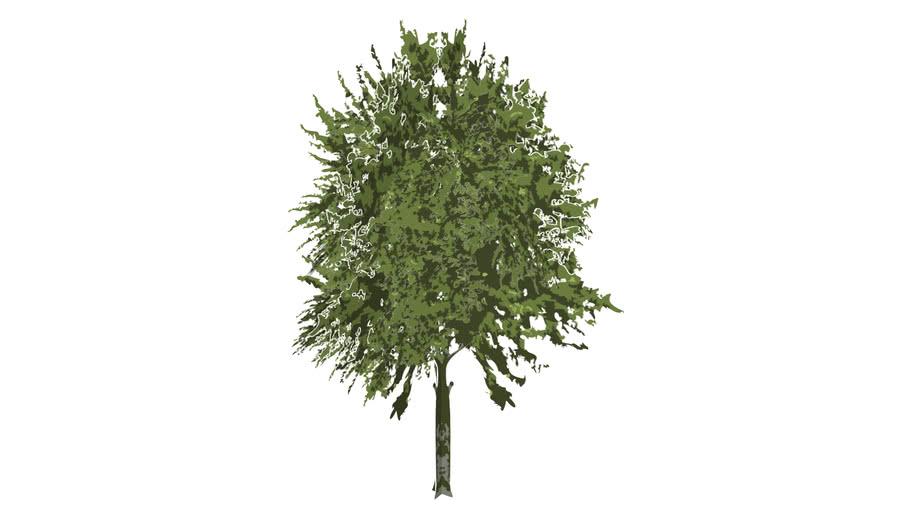 Low Poly Elm Tree