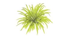 Grasses 3D