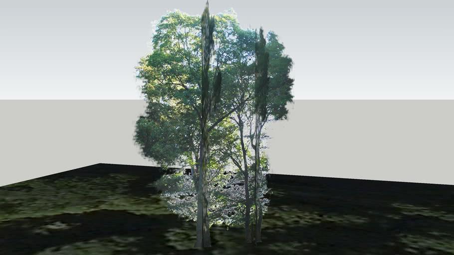 Zamok Veselí nad Moravou - Strom 192