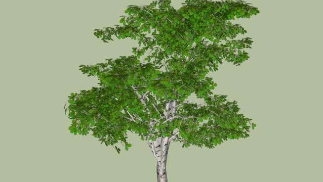 CÂY/TREE/PLANT
