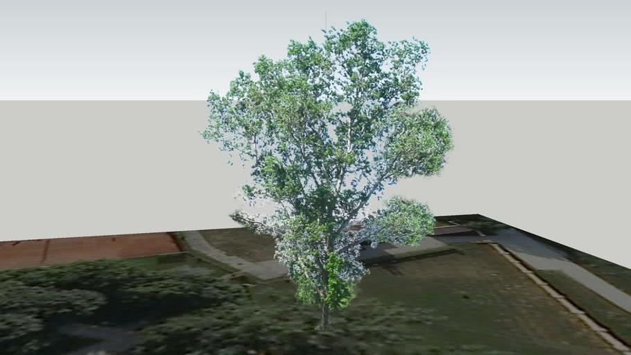 Zamok Veselí nad Moravou - Strom 19