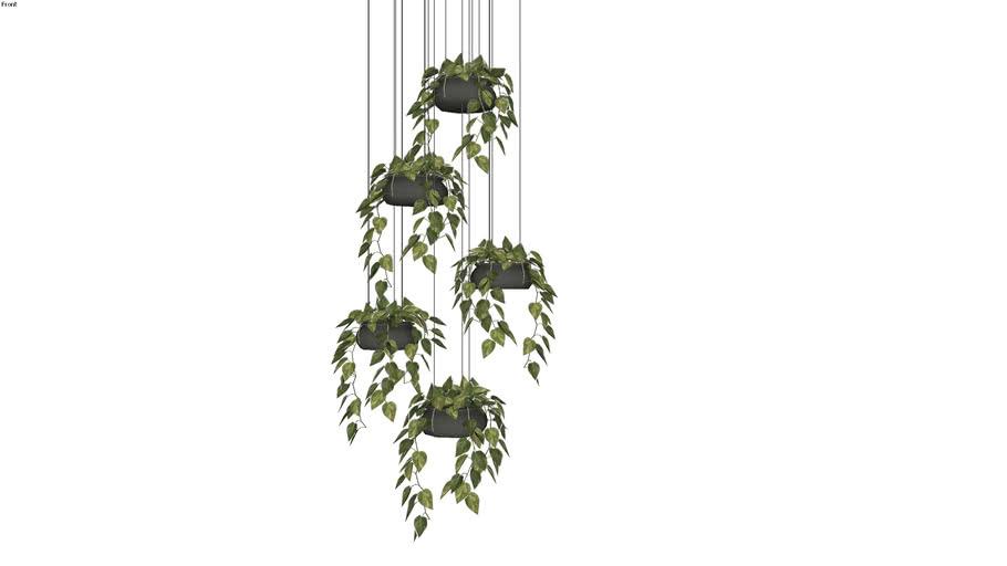 Planta pendente