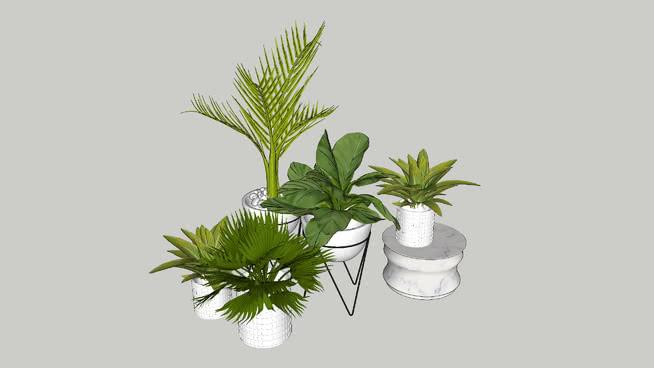 Favorite House Plant
