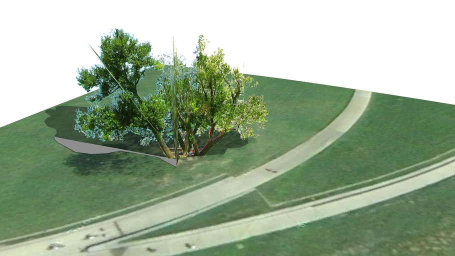 Old tree Washington Monument