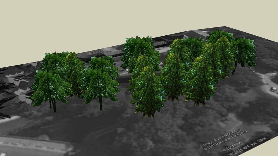 Drzewa Olsztyn 113