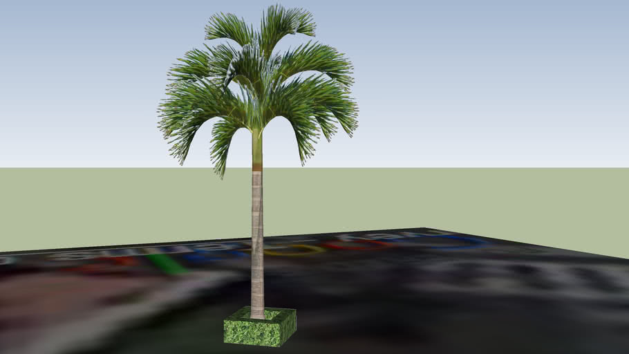 medium palm tree with vegetation base at 1 E de La Guerra St