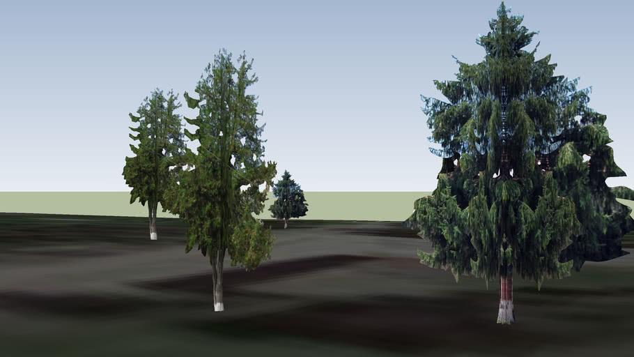 Дървета 4