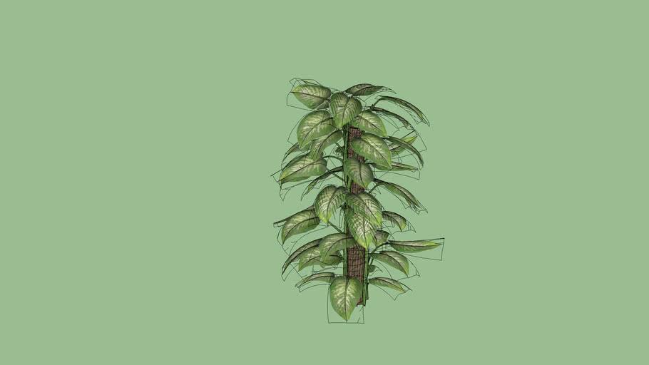 vp333 planta 016