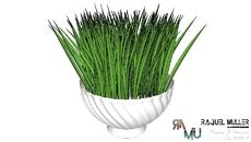 Paisagismo e Vegetação