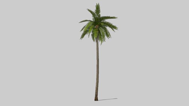FF_tree_coconutpalm04