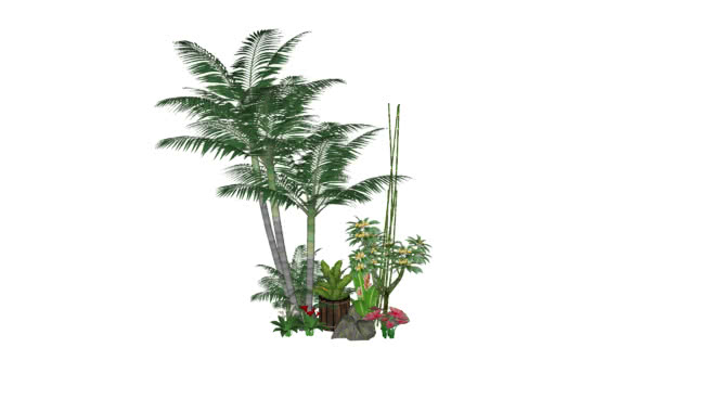 Tree Grass Plant