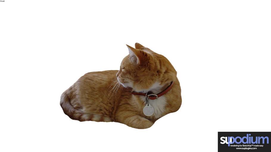 Podium Browser Cat 01