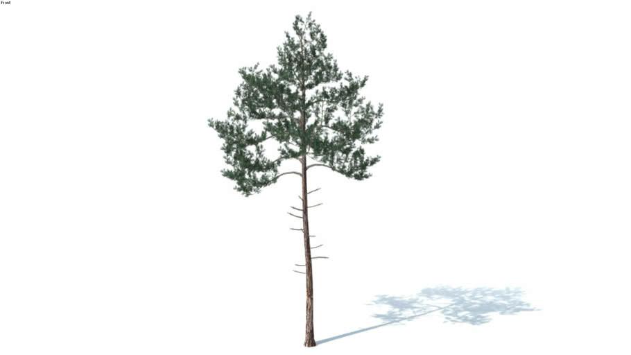 Low poly 3d tree (026)