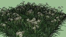 Flowers/Растения