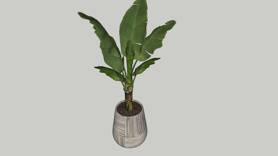 Vegetation 19
