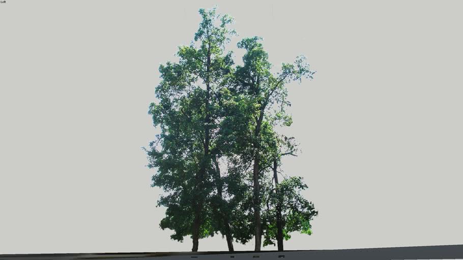 Zamok Veselí nad Moravou - Strom 34