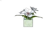 Decor: Plants/Vases