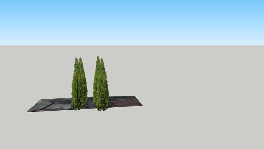Δέντρα στο Νηπιαγωγείο Γιαννιτσά - Giannitsa, Greece (2)