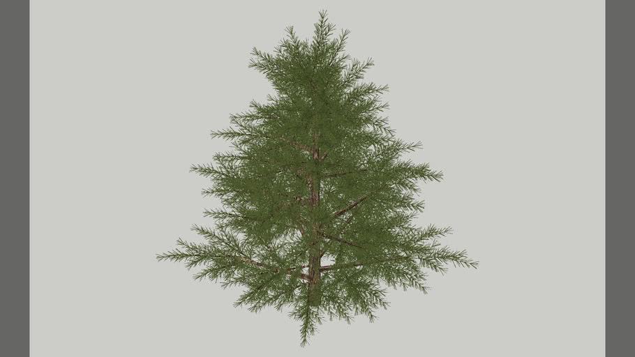 Pine Tree -Type 1
