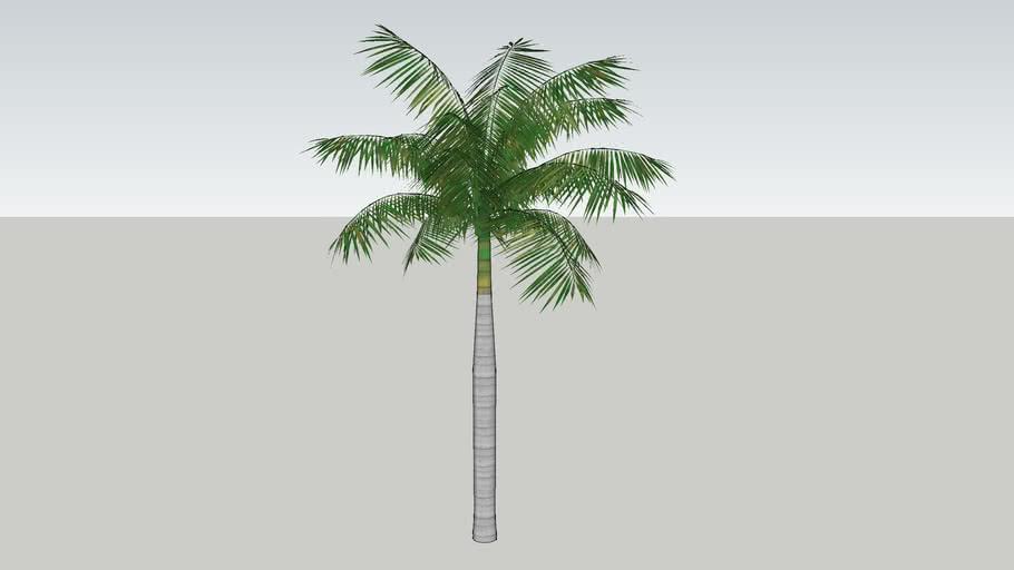 tree_palm