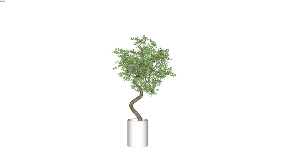 CÂY - PLANT