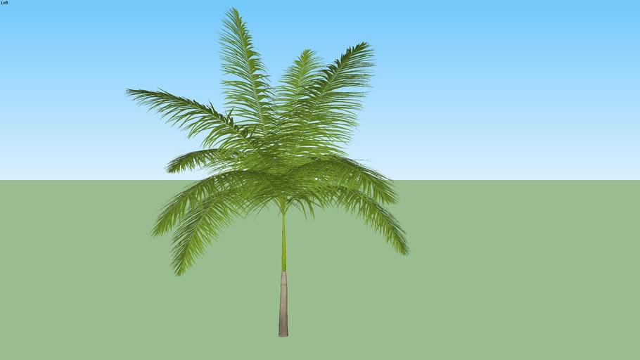 Palmeira 35