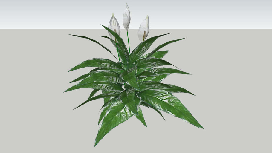 vegetação2