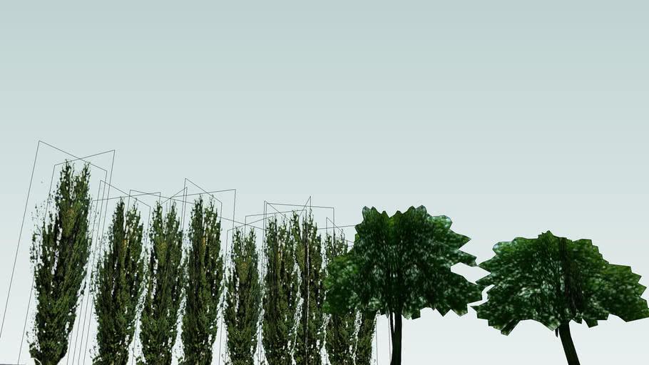 Drzewa Olsztyn 169