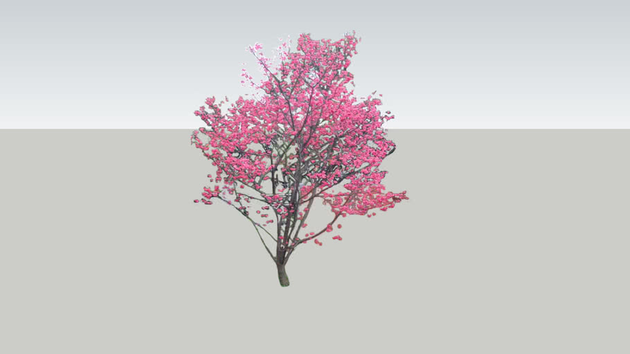 Cherry Blossom 3d Warehouse